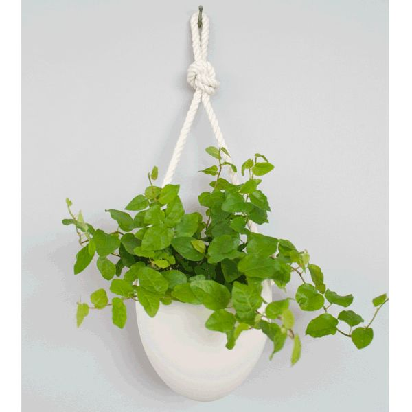 1000 Images About Hanging Wall Planters For Ellis Patio