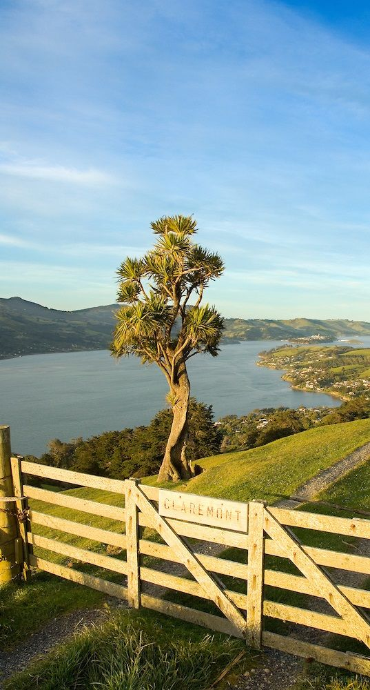 Otago Harbour and Cabbage Tree, Claremont Farm - New Zealand