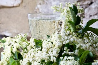 Domácí šampaňské z květů černého bezu   Home-Made.CéZet