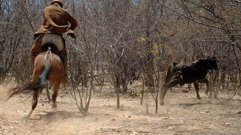 """Petition · Globo: remove the """"steer handle in the bush"""" World Series Games · Change.org"""