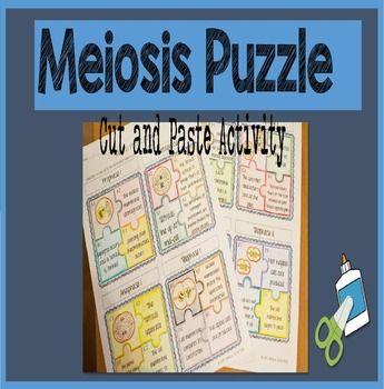 meiosis puzzle kresby. Black Bedroom Furniture Sets. Home Design Ideas