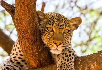 South Africa Safari | Luxury African Safari Tours, Camps & Lodges ...