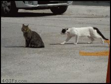 Ramblings of a Semi-Mad Man: That Cat is Stealthy!!!