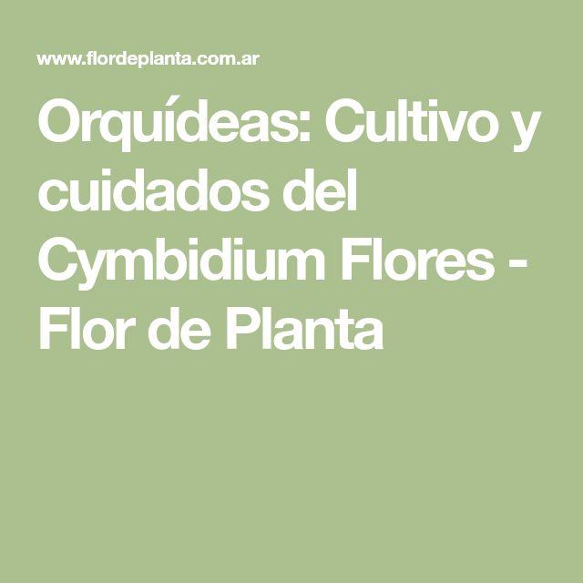 Orquídeas: Cultivo y cuidados del Cymbidium Flores - Flor de Planta