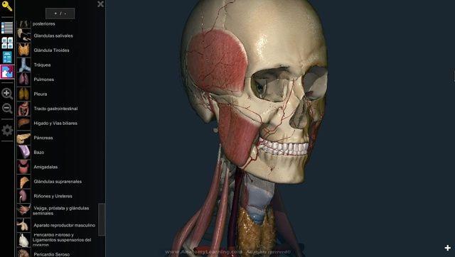 AnatomyLearning es una aplicación gratuita que nos ofrece un completo atlas del cuerpo humano en 3D.