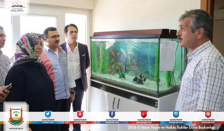#BüyükşehirHerYerde Akvaryum balığı yetiştirilecek kadar temiz olan su, işlemlerin ardından tarlalardaki ürünler için doğaya salınıyor.