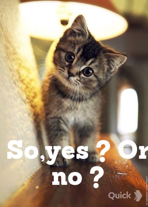 Say yes !!!