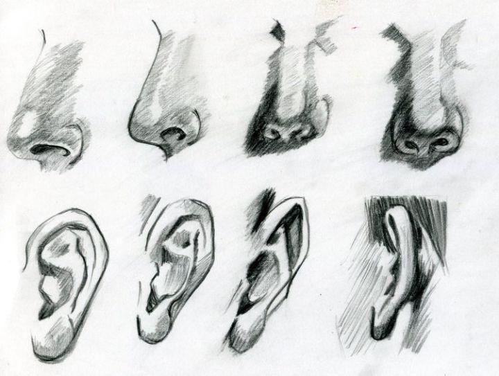 1000  ideas about Dessin Nez on Pinterest   Body draw, Turoriel ...