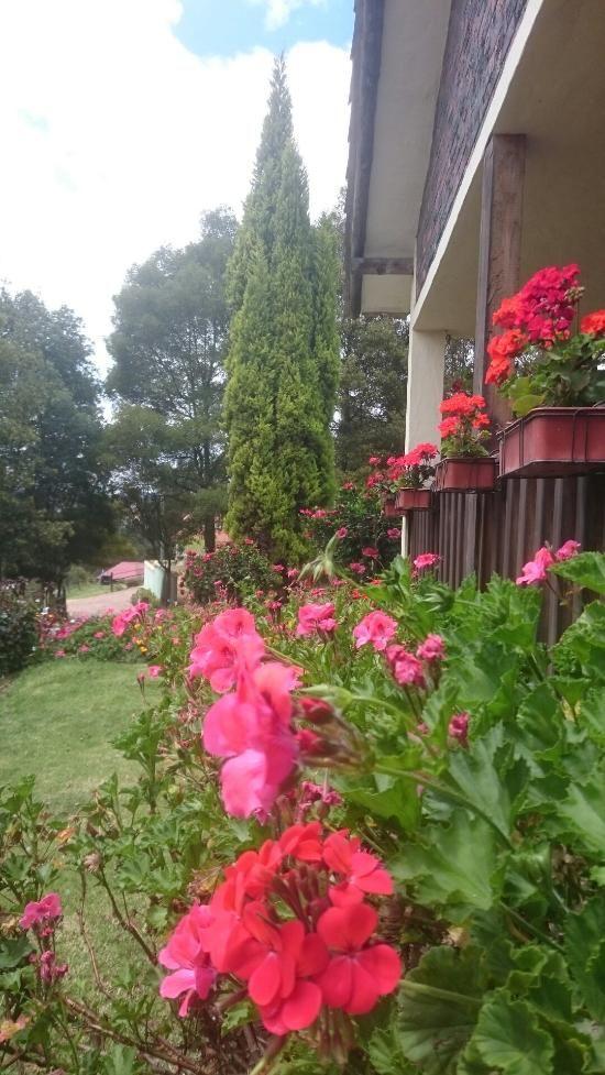 Granja el Milagro - Cabañas Campestres, Tibasosa: 42 opiniones y 77 fotos de viajeros sobre el Granja el Milagro - Cabañas Campestres, clasificado en el puesto no.1 de hoteles en Tibasosa.