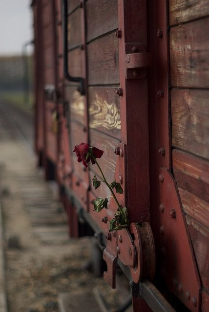 A rose left on the train car which stands on the unloading ramp of the Auschwitz II-Birkenau site.
