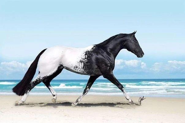 Фото: Лошадь породы Аппалуза