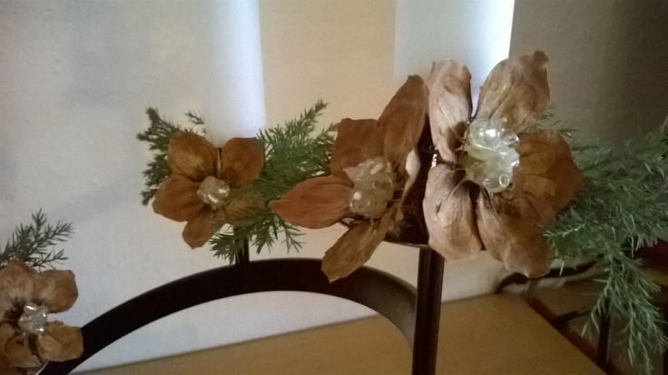 Blomster af fyrrekogler