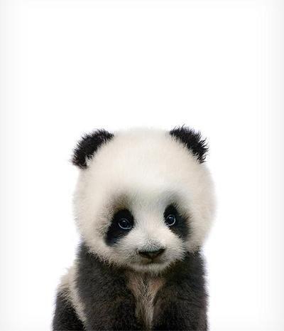 Baby Panda Printable Art