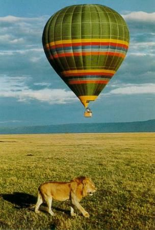 How is this for a quirky honeymoon activity: a balloon safari! At least I'd be sure that L wouldn't get eaten by lions... ;)