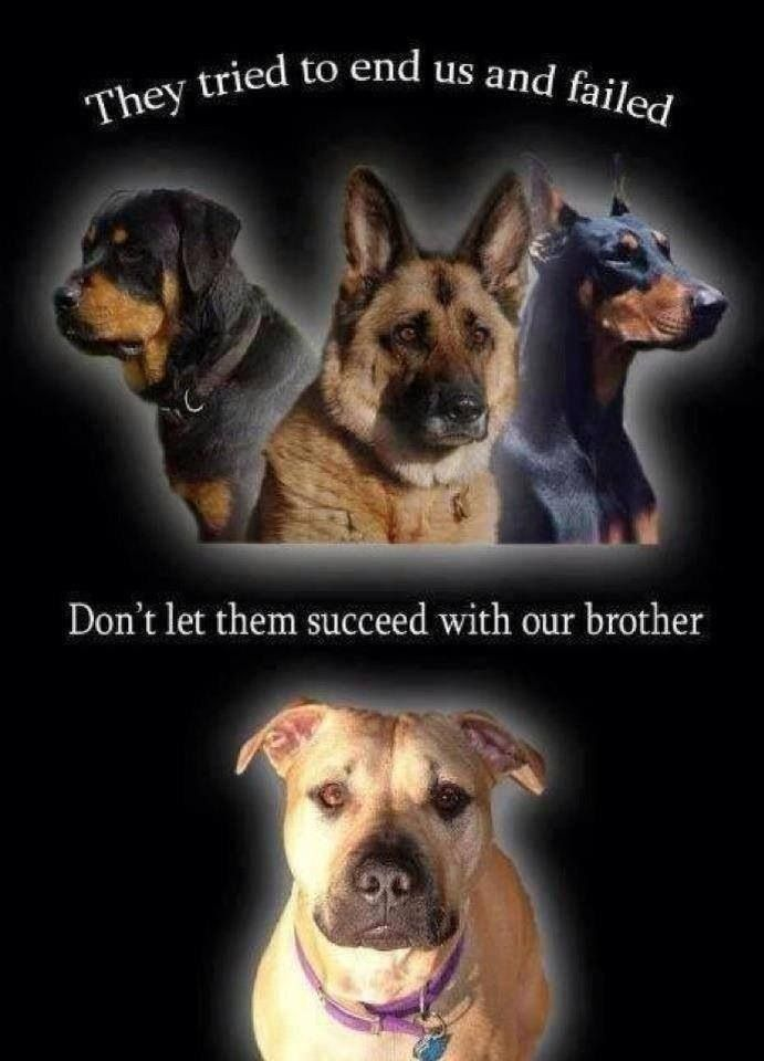 Pitbulls are not what everyone thinks they are. They are amazing dogs that are loving. It's people who make them the way people view them.