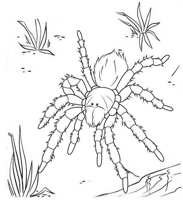 5 Beautiful Tarantula Coloring Pages For Relaxing