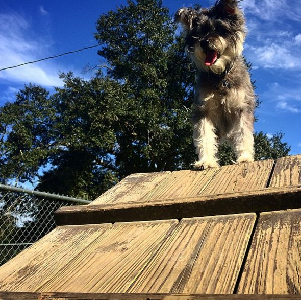 So high up at Lafayette Dog Park at Youth Park! - Lafayette, LA - Angus Off-Leash #dogs #puppies #cutedogs #dogparks #lafayette #louisiana #angusoffleash