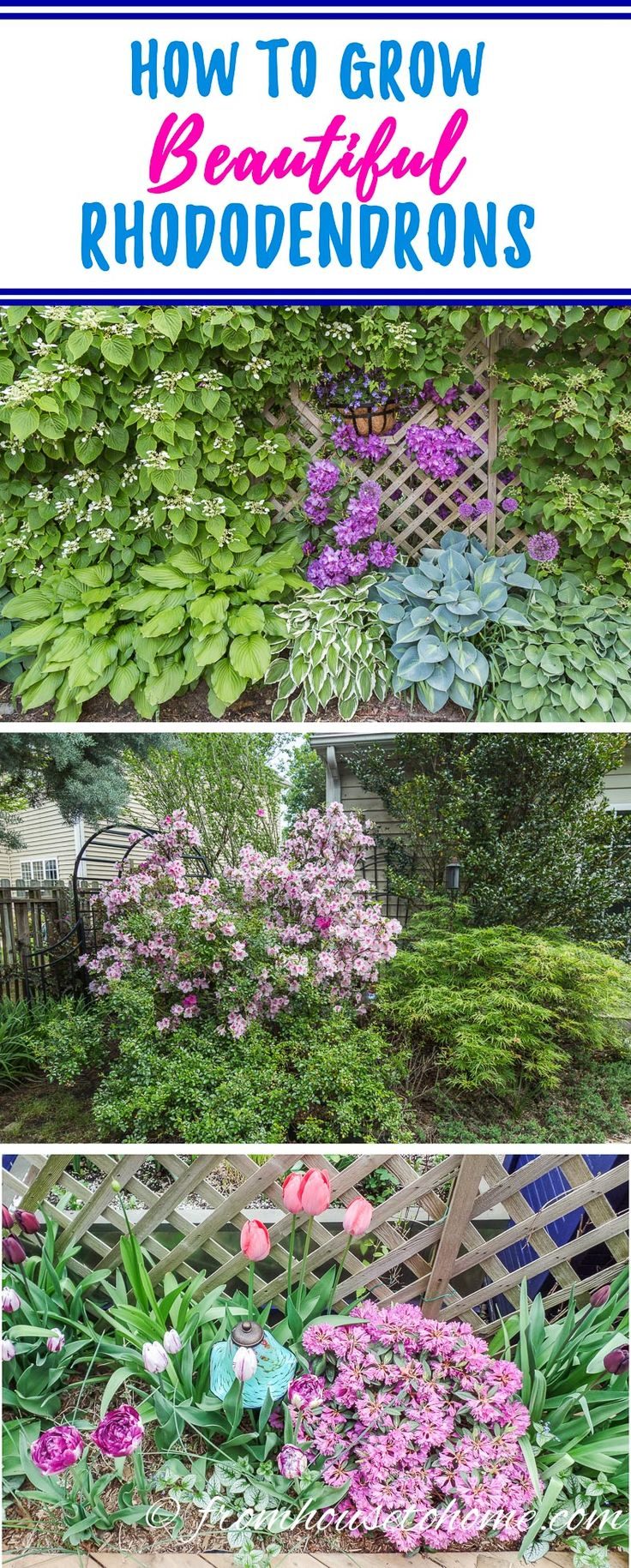 Best 25 azaleas landscaping ideas on pinterest flowers for How to care for rhododendrons after blooming