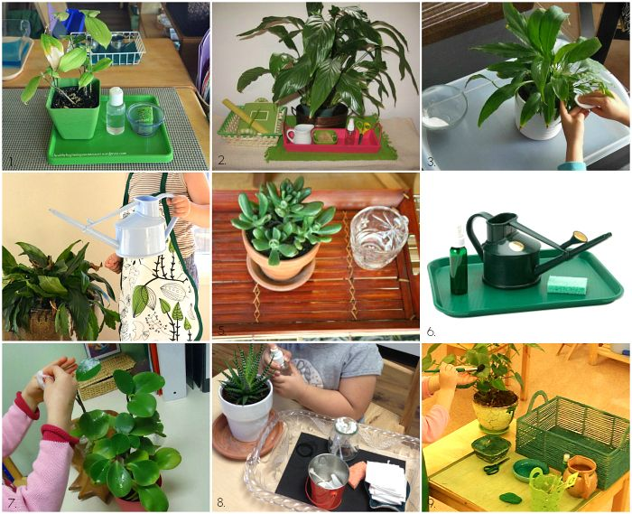 Montessori Care of the Environment - Indoor Plants