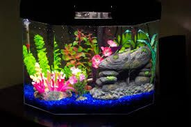 10 gallon fish tank with angelfish - Google Search