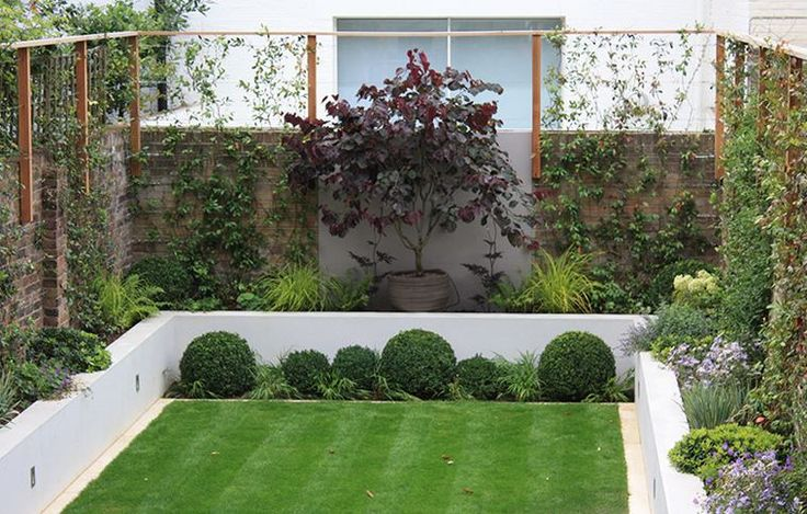 Rectangular lawn sets off an assortment of lush plants in a modern manicured yard.