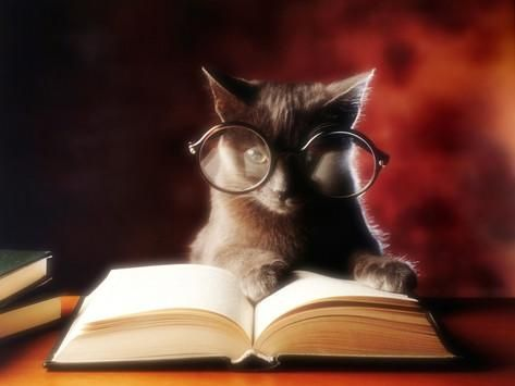 Gray Cat With Glasses Reading A Book Photographic Print