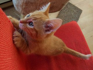 Why Do Cats Scratch Things? #cats #catbehavior #catscratching #whycatsscratch (Article from www.MetaphoricalPlatypus.com)