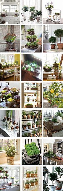 Indoor-Plant-Ideas by ronniedeleede, via Flickr