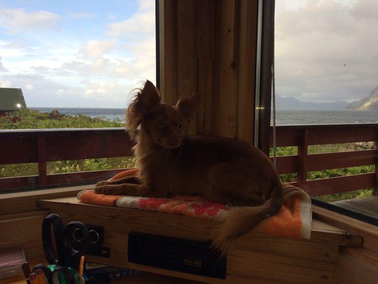 Kanel kose sæ på sin nye utsiktsplass
