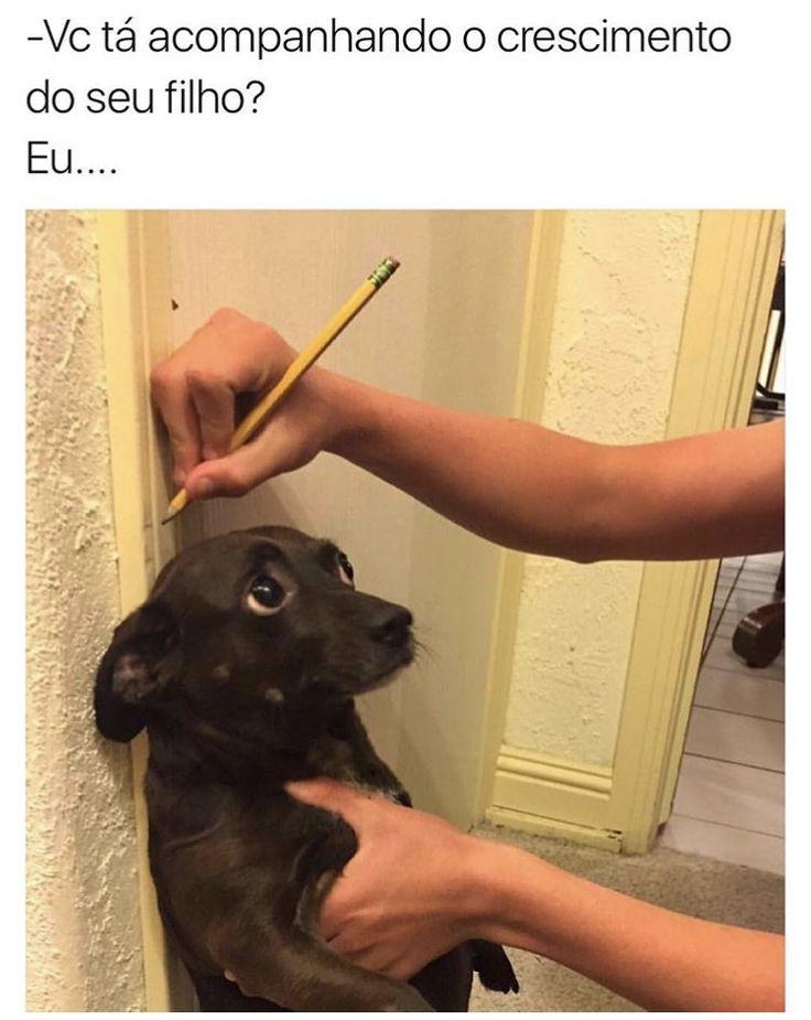 ❤️❤️ #petmeupet #cachorro #filhode4patas #maedepet #paidepet #maedecachorro