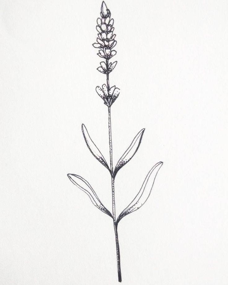 Image result for lavender tattoo | Lavender tattoo ... |Lavender Tattoo Outline