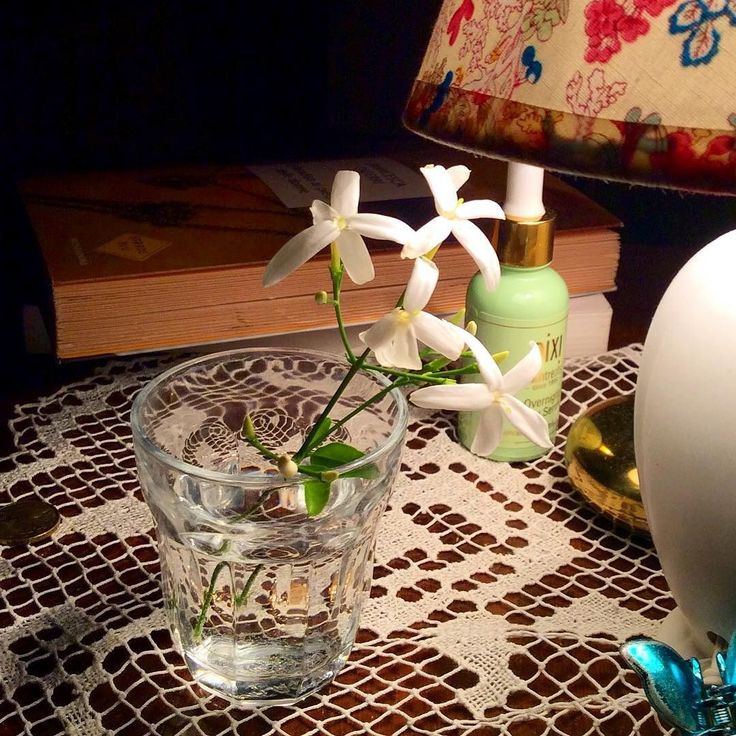 my moon garden's #jasmine / #bedtime #magic #joy