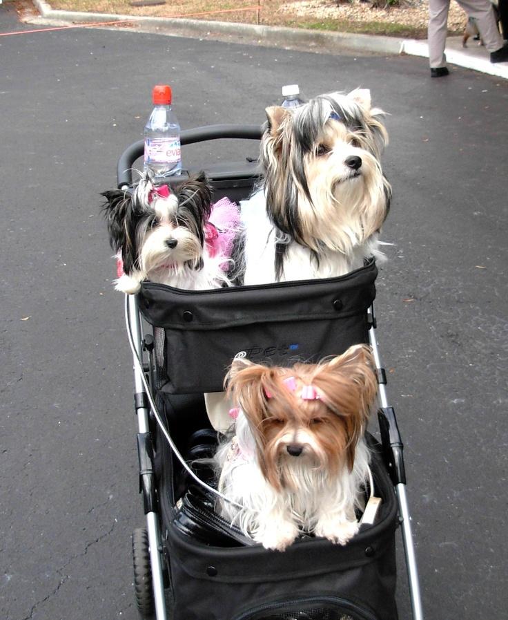 Bri, Baby Elle and Gucci