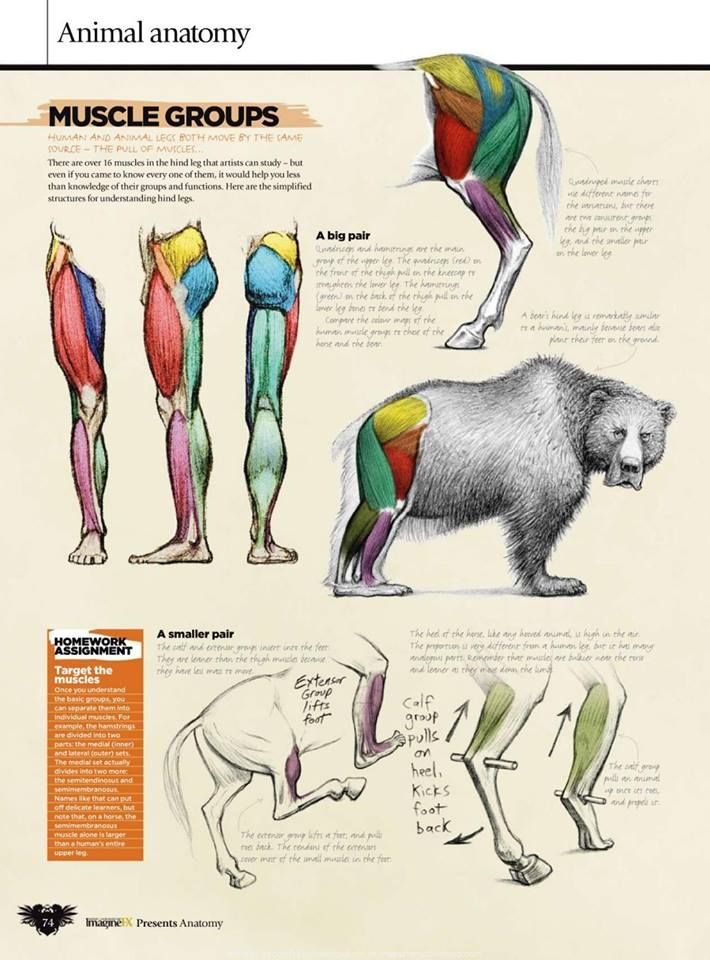 How To Draw And Paint Anatomy (https://www.facebook.com/pg/CuteStudi0/photos/?tab=album&album_id=1380507445343442) ★ || CHARACTER DESIGN REFERENCES™ (https://www.facebook.com/CharacterDesignReferences & https://www.pinterest.com/characterdesigh) • Love Character Design? Join the #CDChallenge (link→ https://www.facebook.com/groups/CharacterDesignChallenge) Share your unique vision of a theme, promote your art in a community of over 100.000 artists! || ★