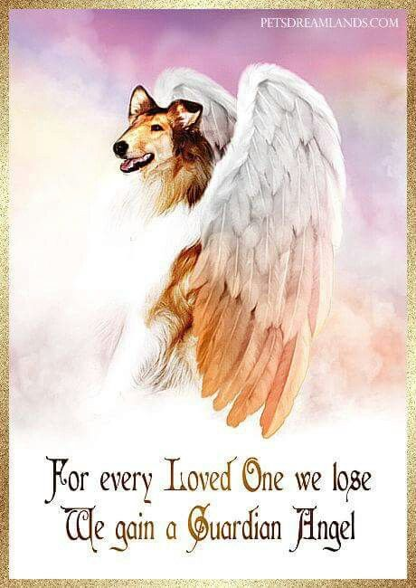 For those beauties who have crossed the Rainbow Bridge ♡♡