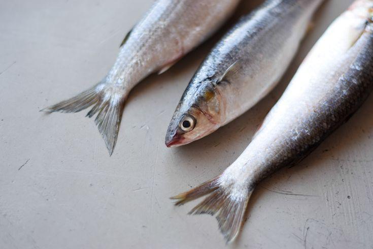 Silver mullet fish