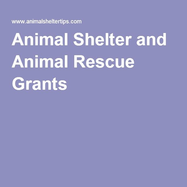 Animal Shelter and Animal Rescue Grants