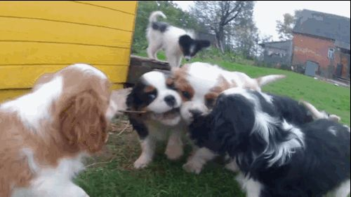 """""""THIS STICK IS GREAT AND SO IS SHARING."""" 