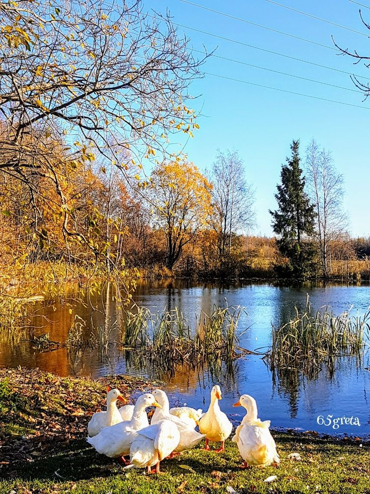 At the duck pond 🦆