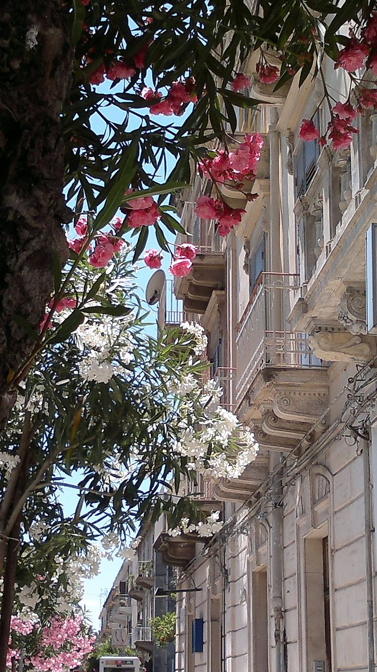 ~Siracusa, Italy ~ gorgeous oleander trees~ #siracusa #siracusa #sicilia #sicily
