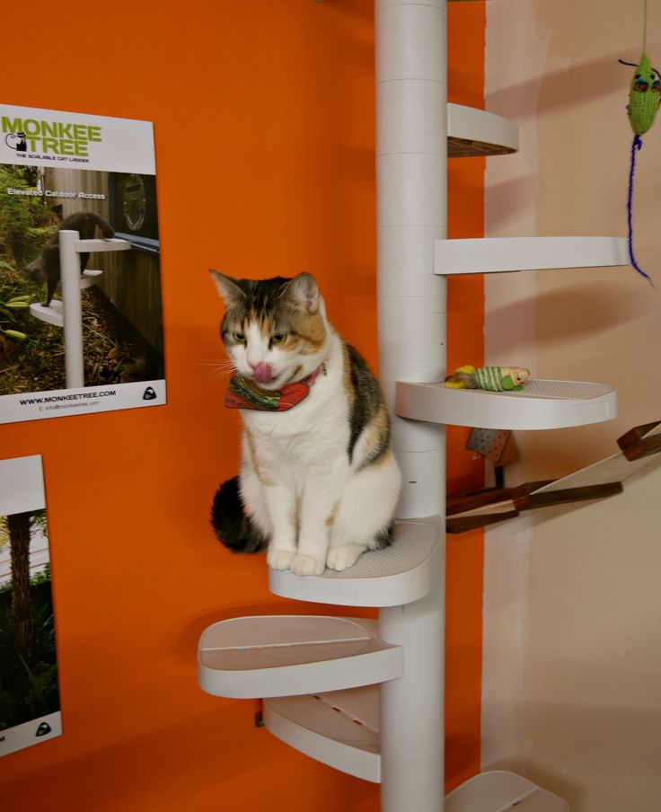 Hamburglar at Barista Cats Cafe, Auckland NZ