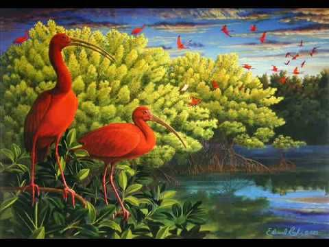 10 Best The Scarlet Ibis By James Hurst Genre Short Story