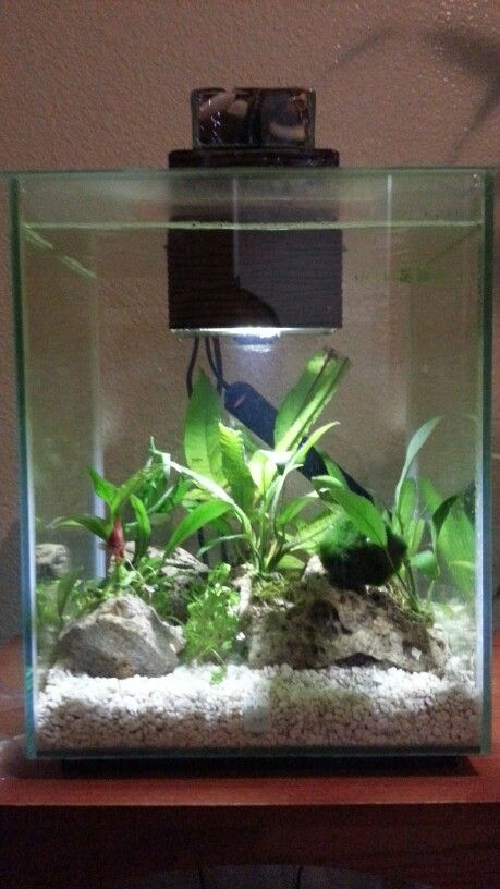 Fluval chi 5 gallon 1 female crowntail betta and a few for Fish tank vs pond