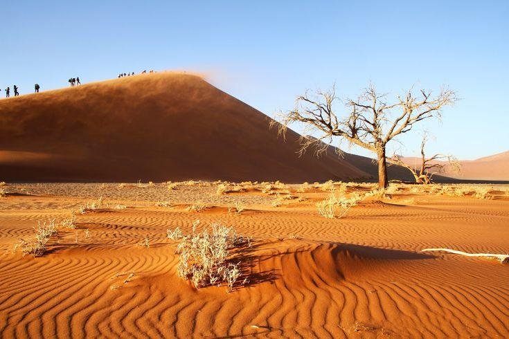 """O deserto da Namíbia estende-se por uma vasta área, da qual 50000 km2 integram o Parque Nacional Naukluft , a maior reserva natural do mundo. Esta área, vulgarmente designada por Namibe, é um """"imenso lugar desértico"""", como lhe chamam os Nama (povo indígena mais antigo da Namíbia) e corresponde a um deserto costeiro com cerca …"""