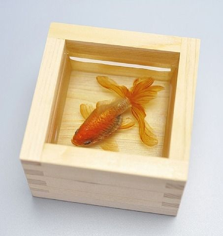 riusuke fukahori