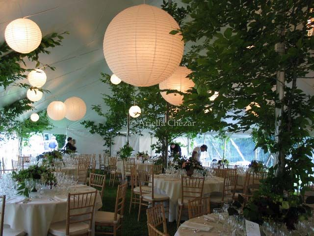What an awesome idea!!!!! A forest themed party.  Pretty cool.