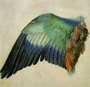 """Albrect Durer wing study """"Wing of a Roller"""" (ca.1512)... I want this in my house somewhere"""