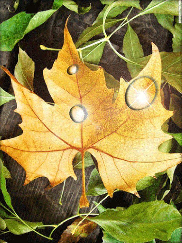 Канзаши, кленовые листочки прикольные картинки