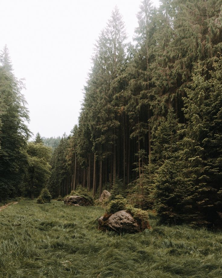 A forest in Saxony