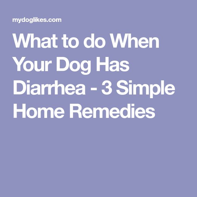 What to do When Your Dog Has Diarrhea - 3 Simple Home Remedies